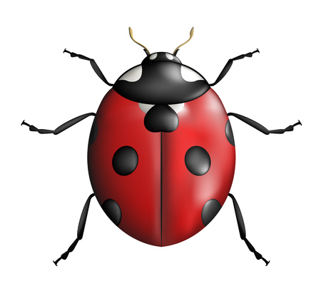 creative ladybug illustration