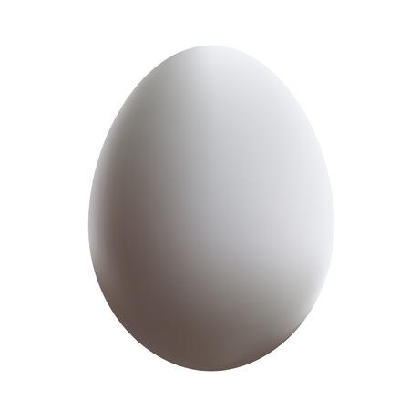white chicken egg  イラスト・ベクター素材