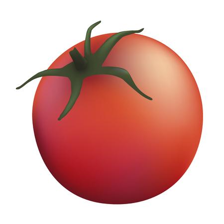 one tomatoe illustration