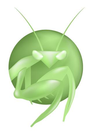 creative mantis illutration