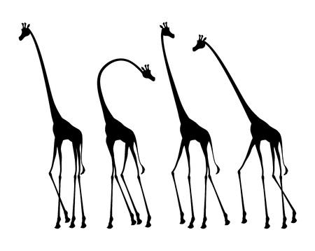african giraffes illustration