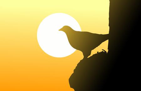 bird and sunset sky
