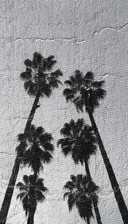 tall palms Фото со стока