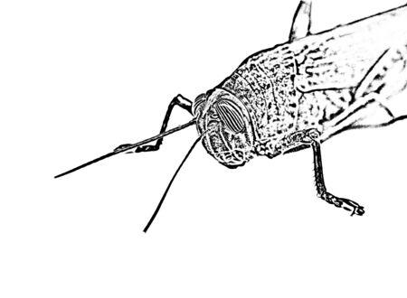 Creative grasshopper detail
