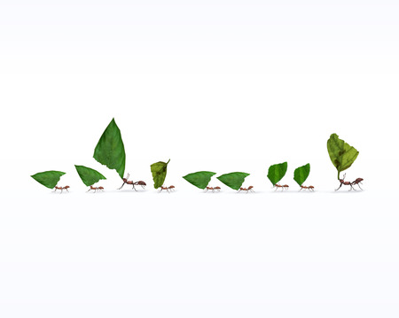 Fire ants marching in line carrying leaves, teamwork concept, 3d render, Фото со стока