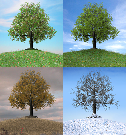 The same tree changing over the duration of four seasons, 3d render illustration 写真素材