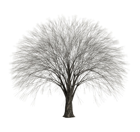 Dead naked tree with thousands of branches, isolated on white background, 3d render,