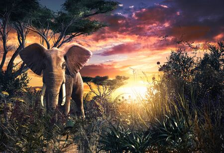 Beautiful scenery of an African Elephant  in the savanna at sunset, 3d render illustration. Zdjęcie Seryjne