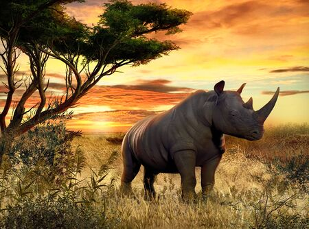 Beautiful scenery of an African Rhino in the Savanna at sunset, 3d render illustration.
