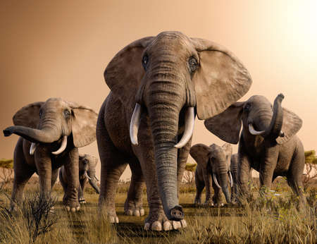 Beautiful scenery of a herd of majestic African Elephants in the savanna at sunset, 3d render. Imagens