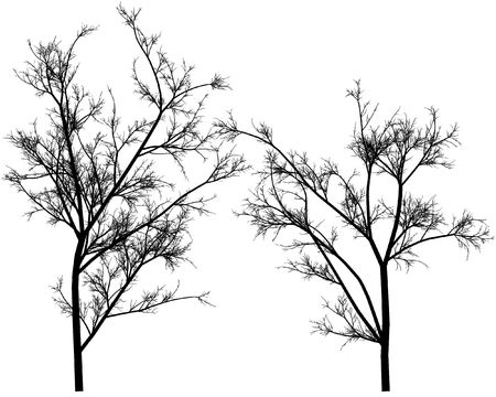 black branches on a white background