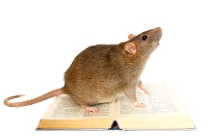 ratones: Rata y el libro sobre fondo blanco close up