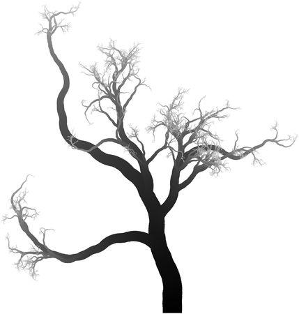 black branches Stock Photo - 6337559