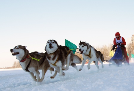 dog sled: RUSSIA, MOSCOW - FEBRUARY 19: Participants compete in arrival Races on the dog teams Strong spirit February 19, 2009 in Moscow, Russia