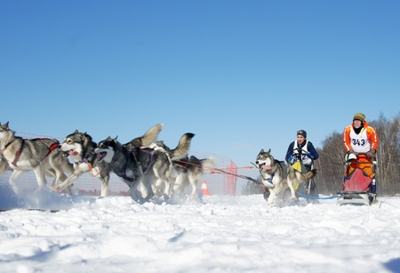 RUSSIA, MOSCOW - FEBRUARY 19: Participants compete in arrival Races on the dog teams Strong spirit February 19, 2009 in Moscow, Russia