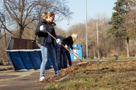 people clean fallen down leaves In park  Stock Photo - 10484116