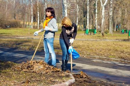 clean cut: people clean fallen down leaves In park