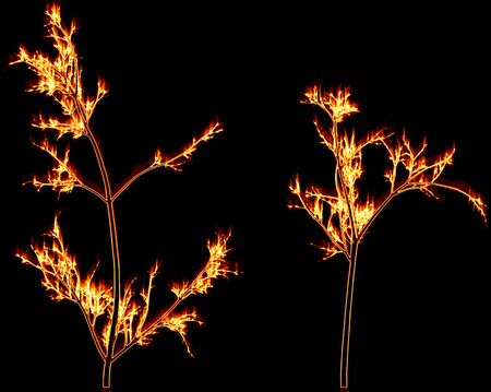 woodpile: Fiery branches on a black background
