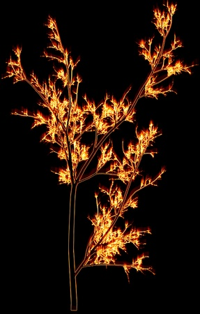 Fiery branches on a black background photo
