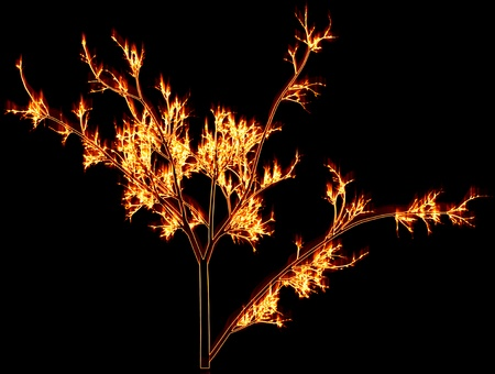 brushwood: Fiery branches on a black background