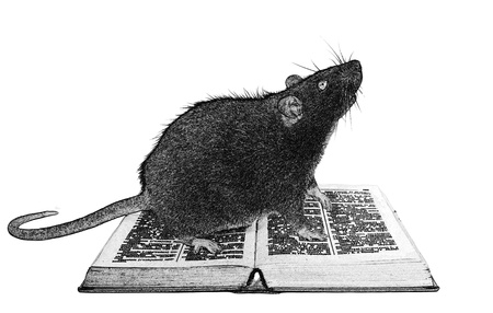 begging: Rat and the book on white background close up