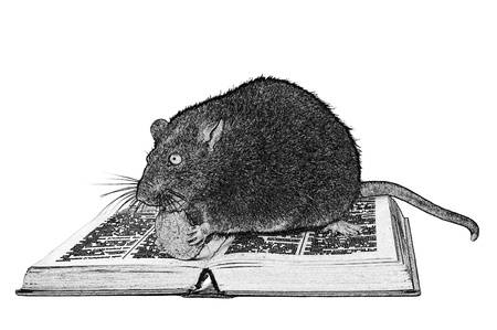 beg: Rat and the book on white background close up