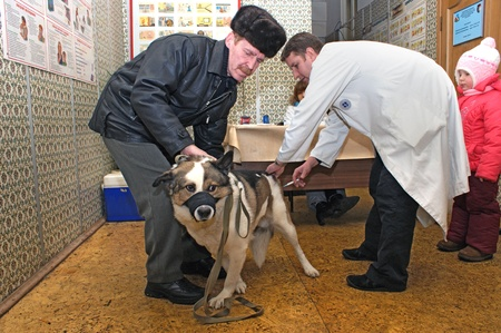 inoculation: Aug 23 2010 Moscow, Planned inoculation of house dogs an exit brigade of veterinary surgeons.