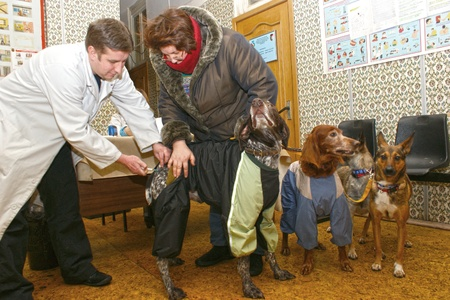 Aug 23 2010 Moscow, Planned inoculation of house dogs an exit brigade of veterinary surgeons.