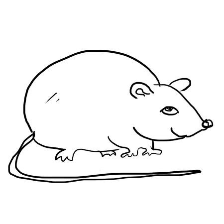 drawing of rat on the white Stock Photo - 12962872