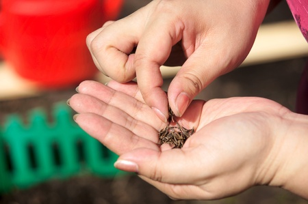 Seeds of plants in a human hand Stock Photo - 13506207