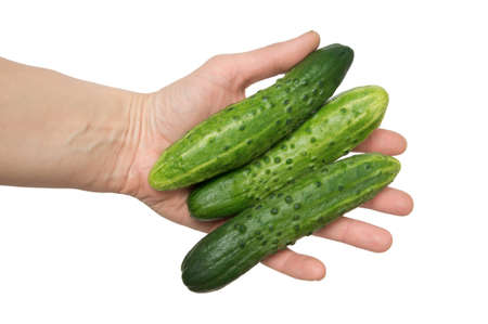 fresh green cucumbers in hand, isolated on the white photo