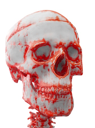 the blood stained skull, isolated on the white photo