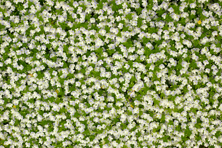 background from small white florets Stock Photo - 24328218