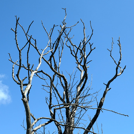 clear day in winter time: Bare branches against the blue sky