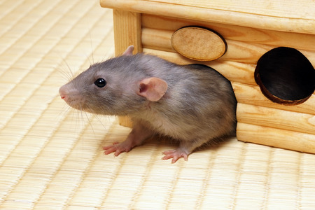 grey house: Grey rat comes out of the tree house.