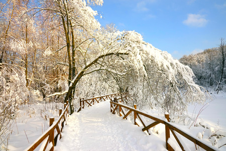 Trail in the forest fenced with a wooden fence, snow-covered tree branches, blue sky. Banque d'images - 118636161