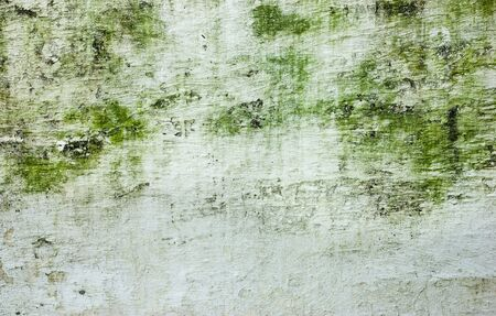 drop ceiling: Wall with green stains and dirt on the surface Stock Photo