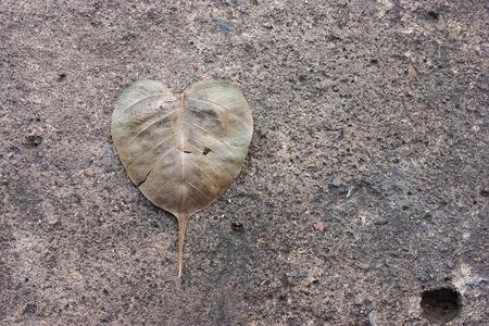 fig leaf: Sacred fig leaf on  the old concrete wall. Stock Photo