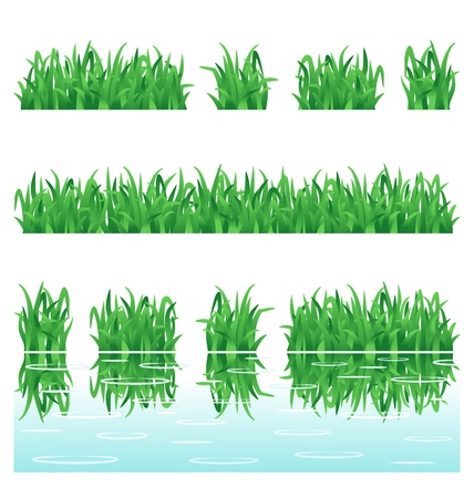 grassland: Fresh green grass design elements  rows isolated on white background, rows with water reflection Illustration