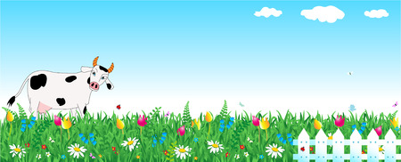 panoramic view: White black-spotted milk cow, panoramic view of spring meadow pasture, fresh green grass, wild flowers, blue sky, fence, copy space