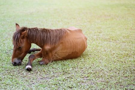 La maladie du cheval brun à la jambe cassée et maigre dans le pâturage en été en plein air. Banque d'images