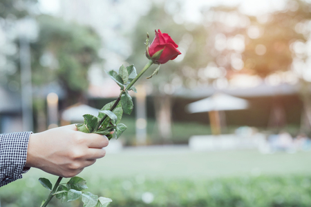 young woman two hands holding red rose flower nature beautiful flowers outdoors Natural light with leave copy space empty write messages in Valentines day, wedding or romantic love concept.