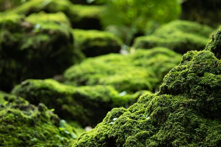 Beautiful Bright Green moss grown up cover the rough stones and on the floor in the forest. Show with macro view. Rocks full of the moss texture in nature for wallpaper. soft focus. Stock Photo