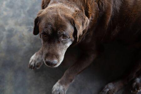 Die Hunde zwei schlafende Besitzer warten vor dem Haus. Geradeaussehend neben dem Gesicht. tierische Haustiere. Dog Lookout Security Guard Anti-Diebstahl, Banditenkonzept stehlen. Lassen Sie Platz zum Schreiben von Text.