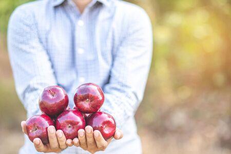 Organic fresh apples are non-toxic in the garden.
