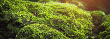 Green moss is naturally beautiful at the park.