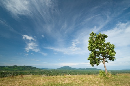 tree on mountain with blue sky photo