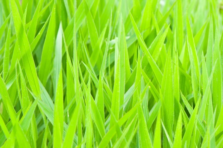 grass in the field photo