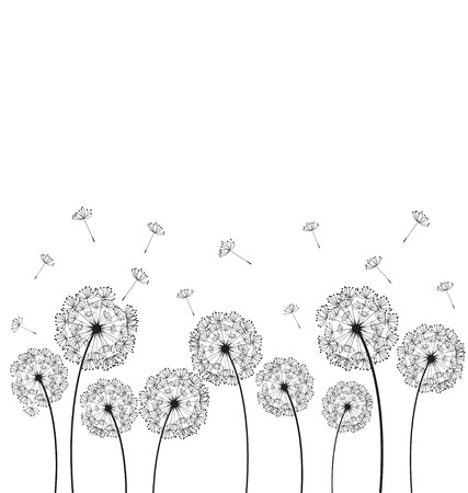 Dandelions plant on white background