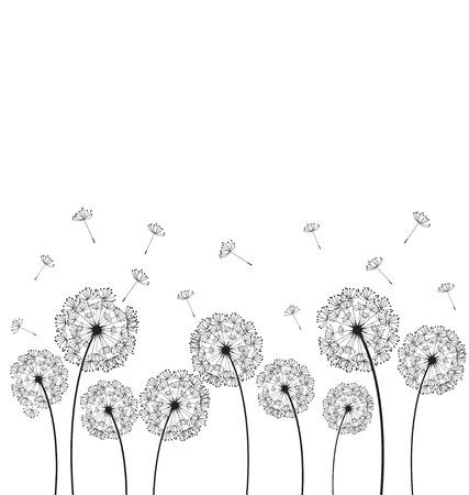 Dandelions plant on white background